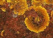 Vign_work.2521740.3.flat,550x550,075,f.crustose-lichen
